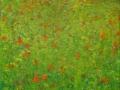 Veld-met-veldbloemen-30-x-30-cm-klein